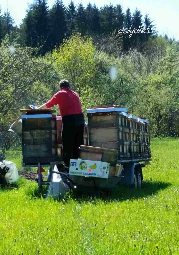 Mein Mann bei den Bienen